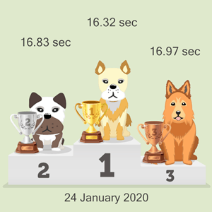 Bitcoin doggy racing