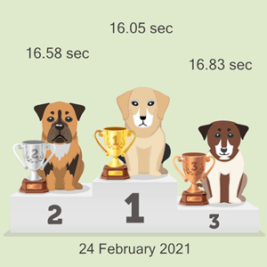 Bitcoin pet race